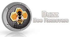 buzz bee removals